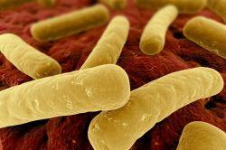 Clostridium_difficile