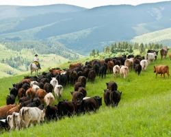 doublerafter-cattle-drives