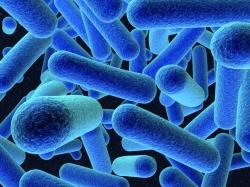 ListeriaMonocytogenes